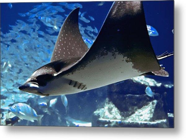 Underwater Flight Metal Print