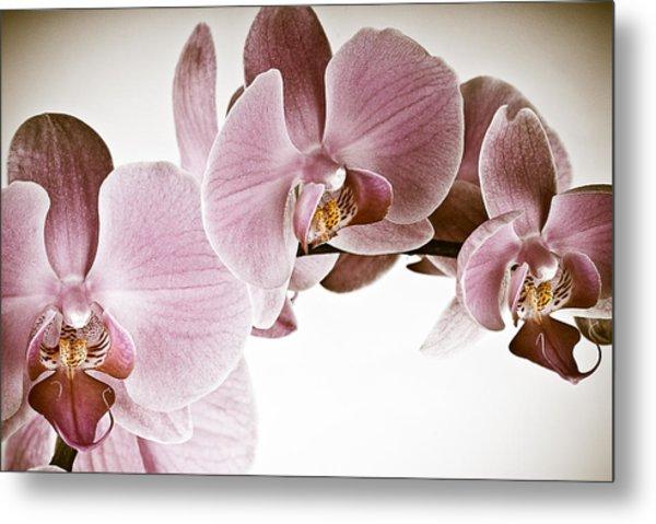 Vintage Orchid Metal Print