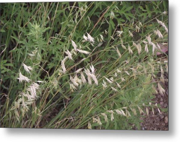 White Reeds Metal Print
