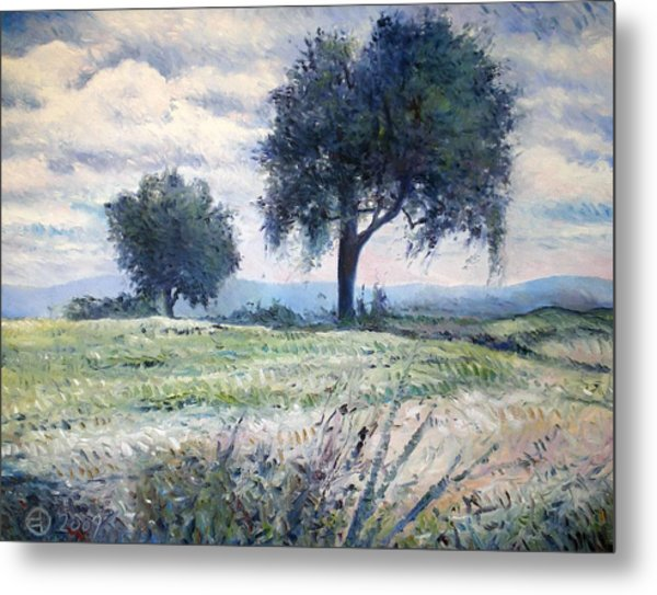 Olive Trees At Monte Cardeto Italy 2009  Metal Print by Enver Larney