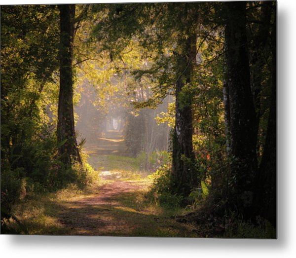 Swamp Trail Metal Print