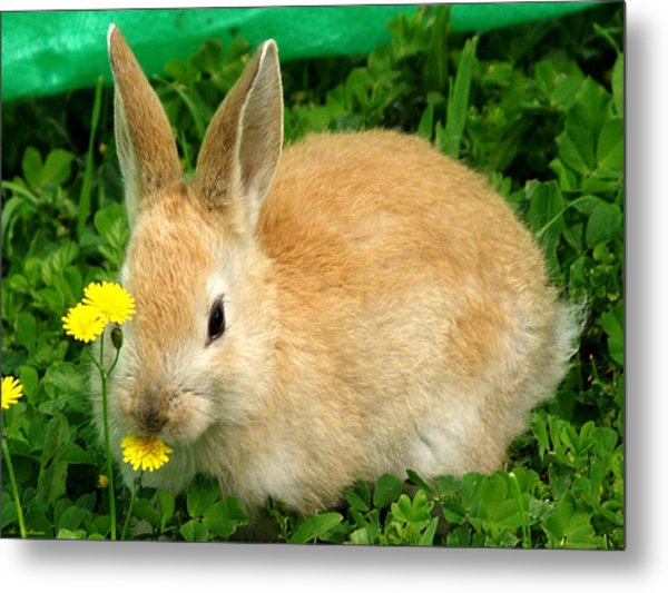 Yellow Smell Metal Print