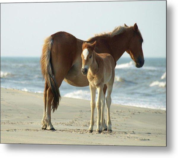Banker Horses - 4 Metal Print
