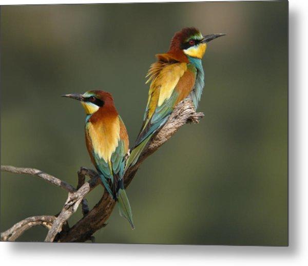 Bee-eater Metal Print