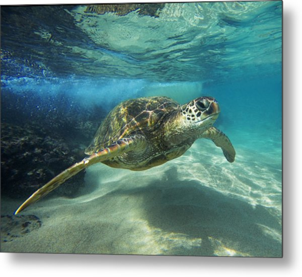Black Rock Turtle Metal Print