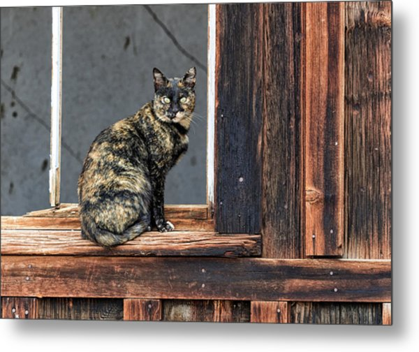Cat In A Window Metal Print