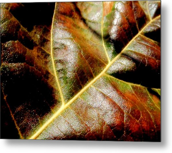 Closeup Metal Print by Beth Akerman
