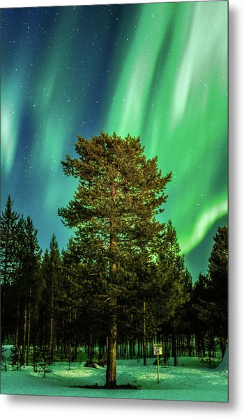 Majestic Tree Under The Northern Lights Karasjok Norway Metal Print
