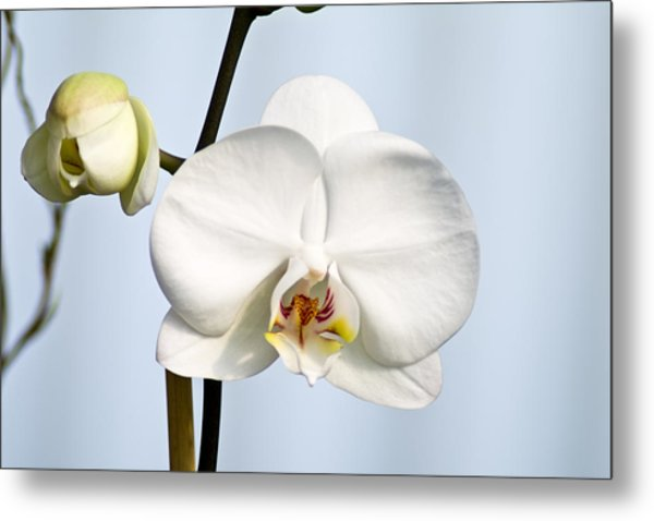 Orchid Metal Print by John Ater
