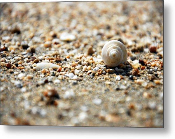 Shells Metal Print by Isaac Nachshon