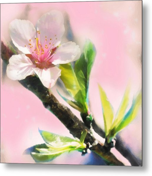 Spring Sunrise Metal Print by Gina Signore
