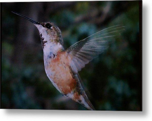 Tan Hummingbird Metal Print