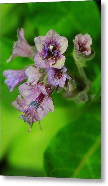 Tiny Purple Flower Metal Print by Patrick  Short