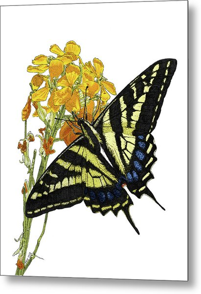 Western Tiger Swallowtail On A Western Wallflower Metal Print