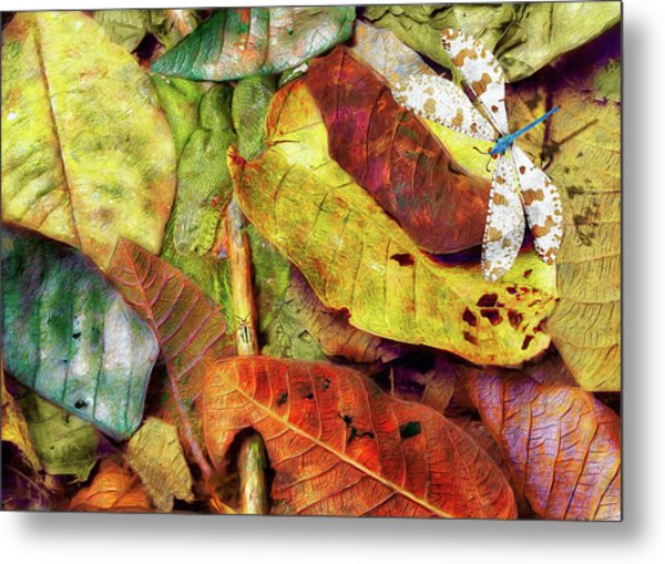 Who's On First Metal Print