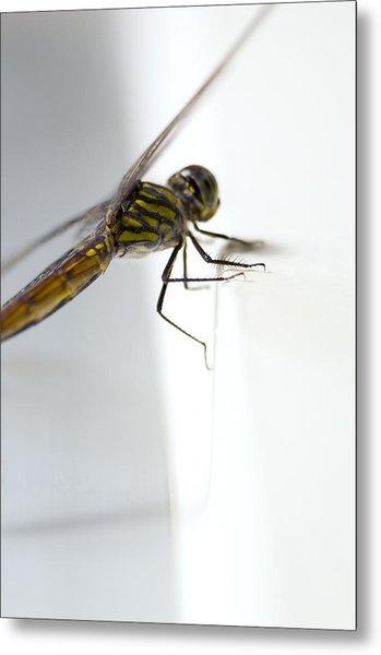 Close Up Shoot Of A Anisoptera Dragonfly Metal Print