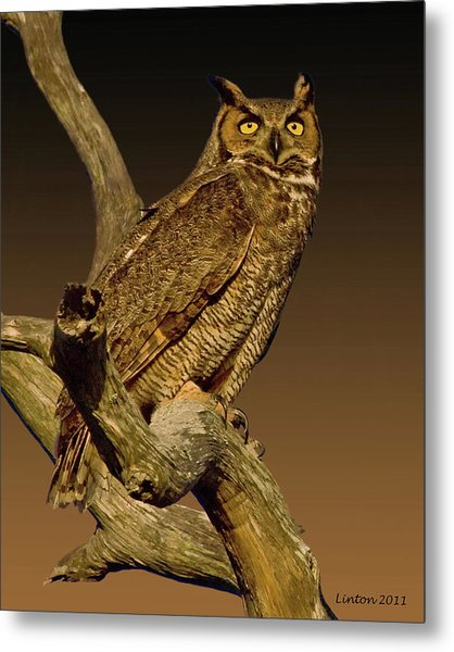 Great Horned Owl Metal Print by Larry Linton