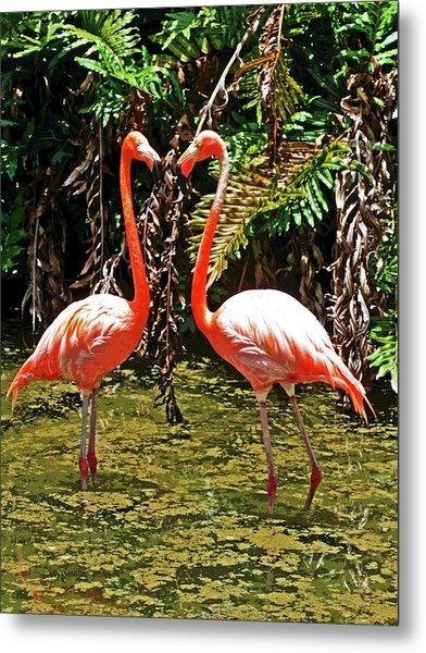 2 Pink Flamingos Metal Print