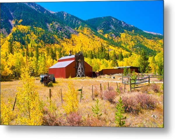 Colorado Aspen Trees Metal Print by Terry Runion