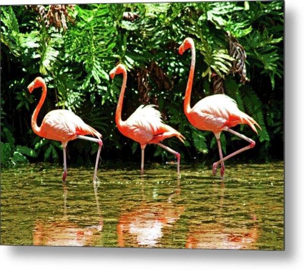 3 Pink Flamingos Metal Print