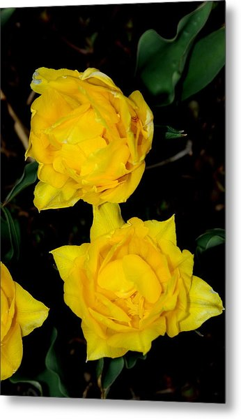 Yellow Flowers Metal Print by Patrick  Short