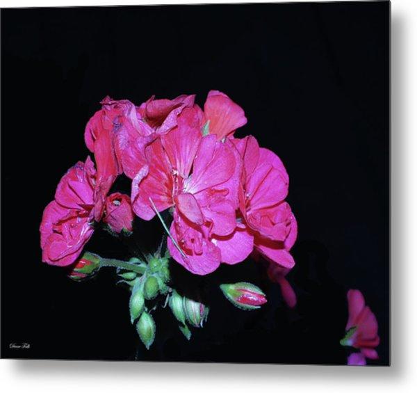 Flower Metal Print by Diane Falk