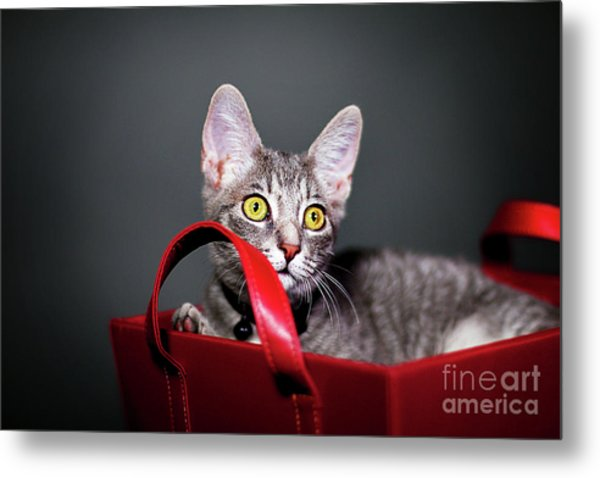 A Basket Full Of Surprises Metal Print