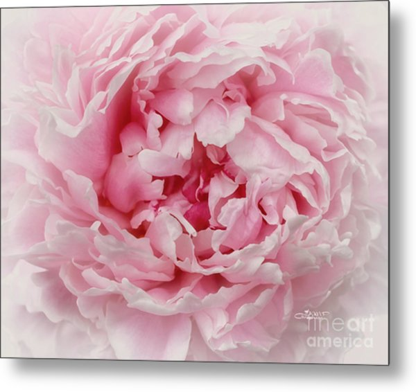 A Beauty At Close Range Metal Print