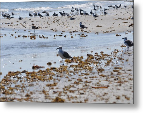 A Flock Of Seagulls Metal Print