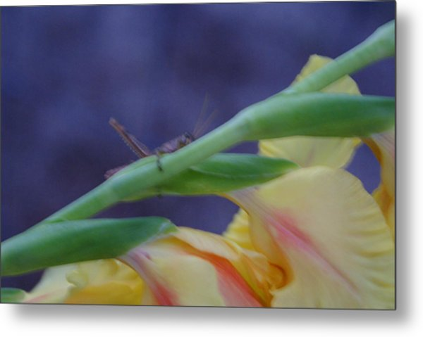 A Glad Hopper Metal Print by Debbie May