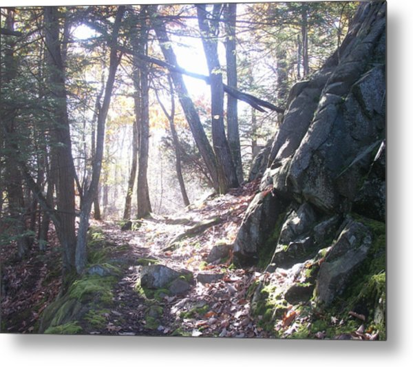 A Path Once Travelled Metal Print