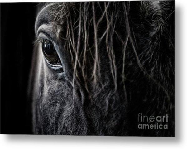 A Race Horse Named Tikki Metal Print