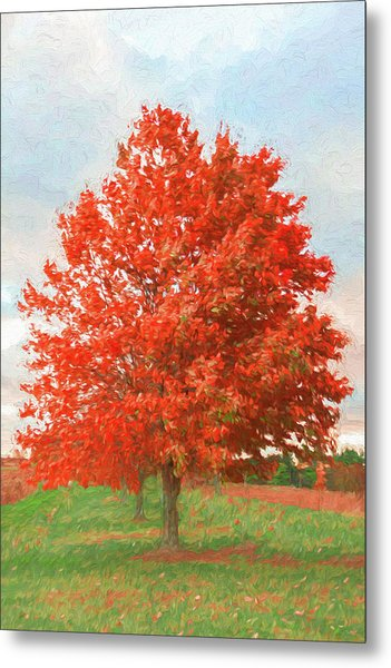 A Red Tree Metal Print by Jeff Oates Photography