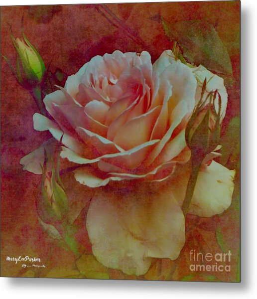 A Rose  Metal Print