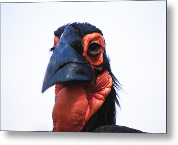 A Very Ugly Bird Metal Print by Carl Purcell