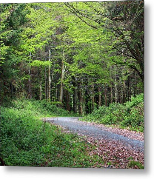 A Walk In The Woods Metal Print by Tom  Doherty