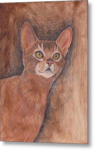 Abyssinian Cat Metal Print by Nicole Grattan