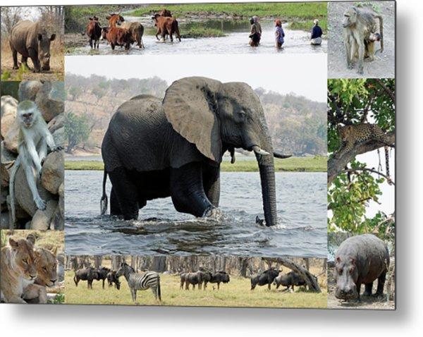 African Wildlife Montage - Elephant Metal Print
