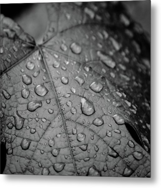 After The Rain #2 Metal Print