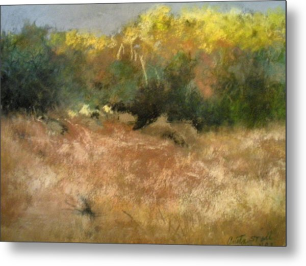 After The Rain Metal Print by Anita Stoll