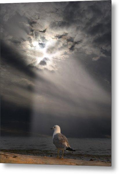 After The Storm Metal Print by Elizabeth Reynders