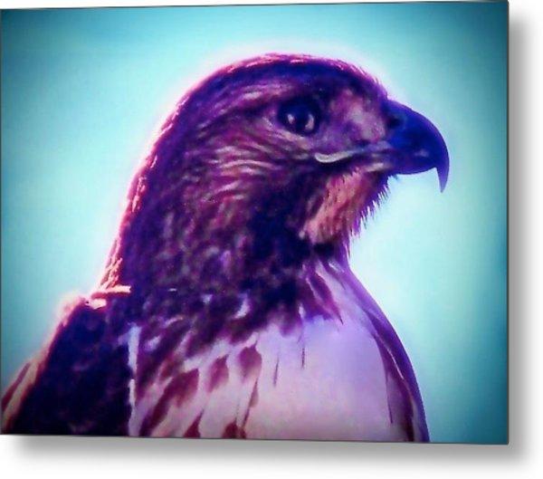 Ak-chin Red-tailed Hawk Portrait Metal Print