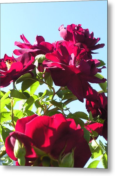 All About Roses And Blue Skies IIi Metal Print by Daniel Henning