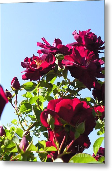 All About Roses And Blue Skies Ix Metal Print by Daniel Henning