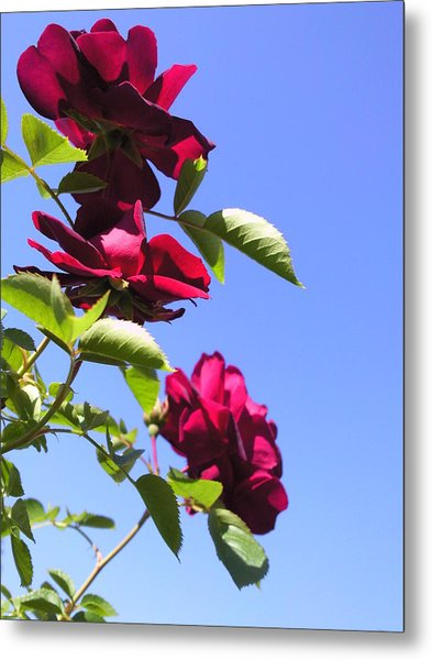 All About Roses And Blue Skies Vii Metal Print by Daniel Henning