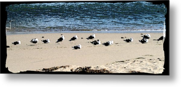 All My Gulls In A Row Metal Print by Ellen Lerner ODonnell