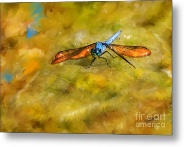 Amber Wing Dragonfly Metal Print