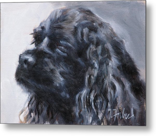 American Cocker Spaniel Metal Print by Isabel Forbes