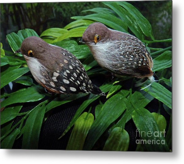 An Old Couple These Two Birds Metal Print