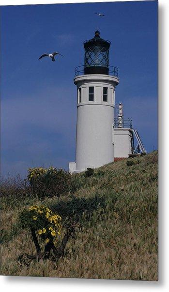 Anacapa Lighthouse And Western Gulls Metal Print